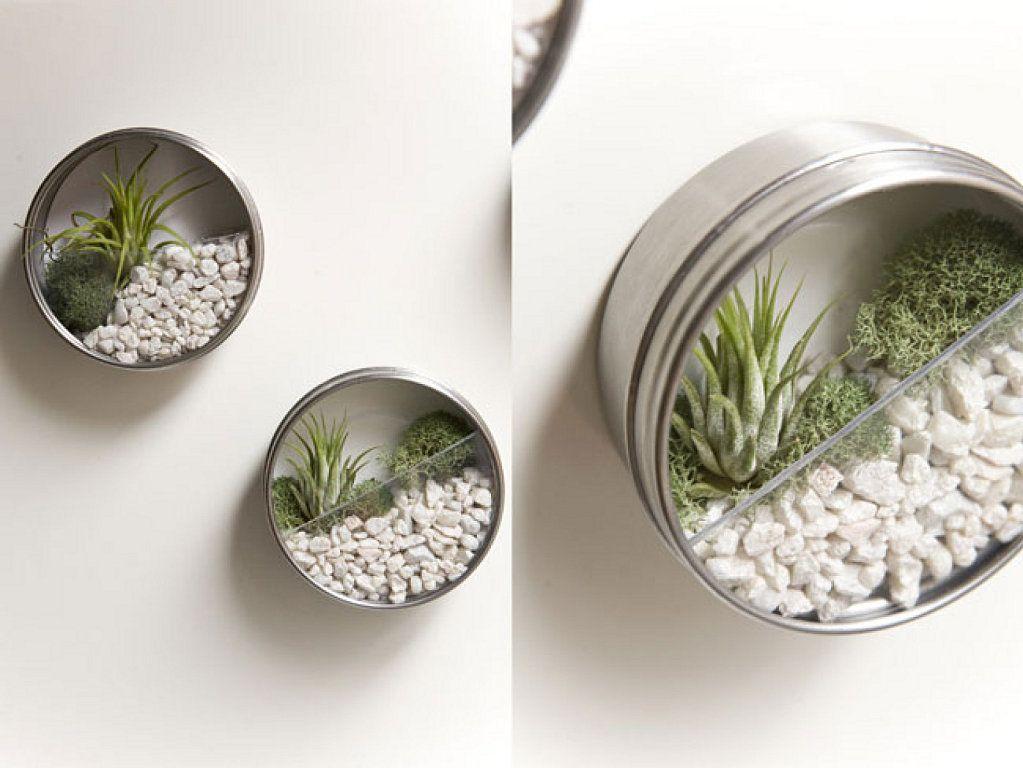 estos son unos originales maceteros verticales o terrarios en miniatura para colgar en la pared hechos con latas de atn tienen plan