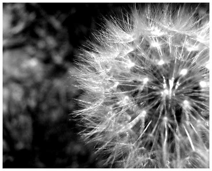 Black and White Flower Study 3 by Nay9.deviantart.com on @deviantART