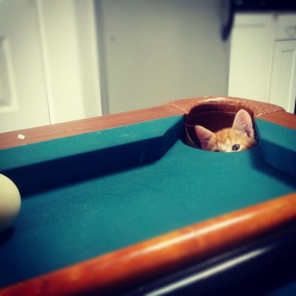 Kitty pool shark.