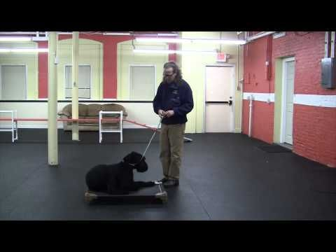 How To Teach Dog Place Command Do It Yourself Dog Training Videos