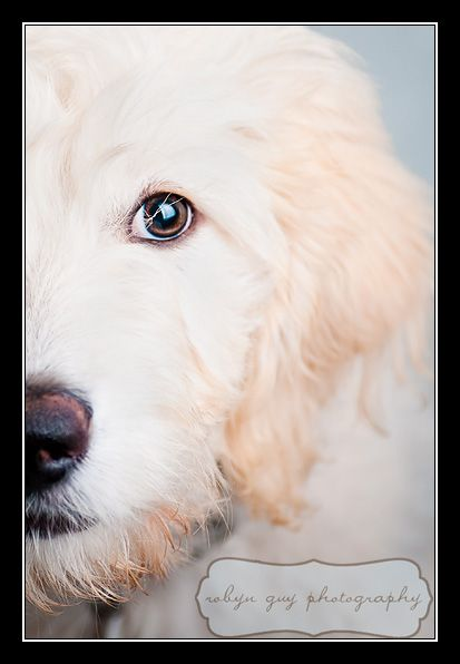 puppy photography idea photography animals and insects