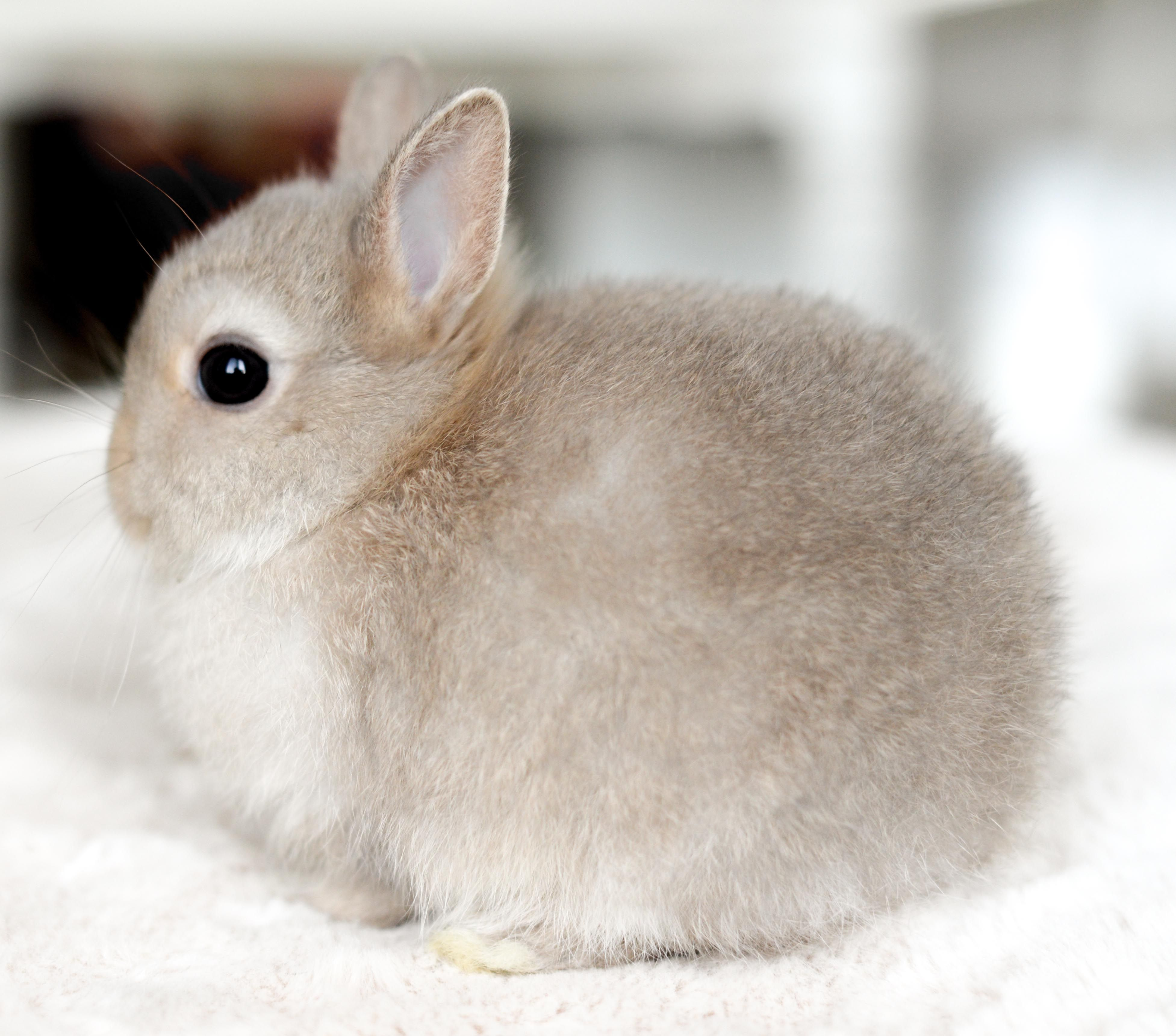 Pin By L U L U On Bunny Love Cute Baby Animals Cute Funny Animals Cute Little Animals