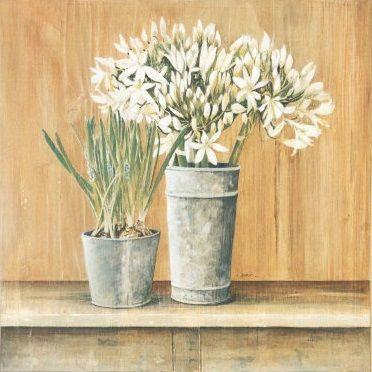 Les Fleurs Blanches, Agapanthes et Muscaris (Laurence David)
