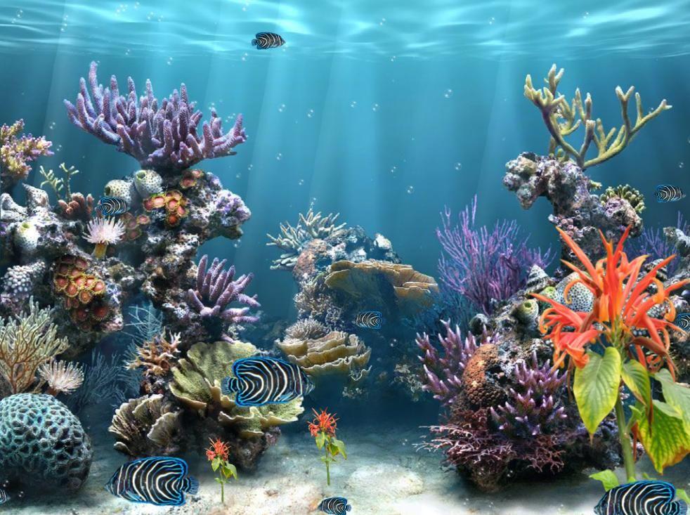C Reef Aquarium Screensaver