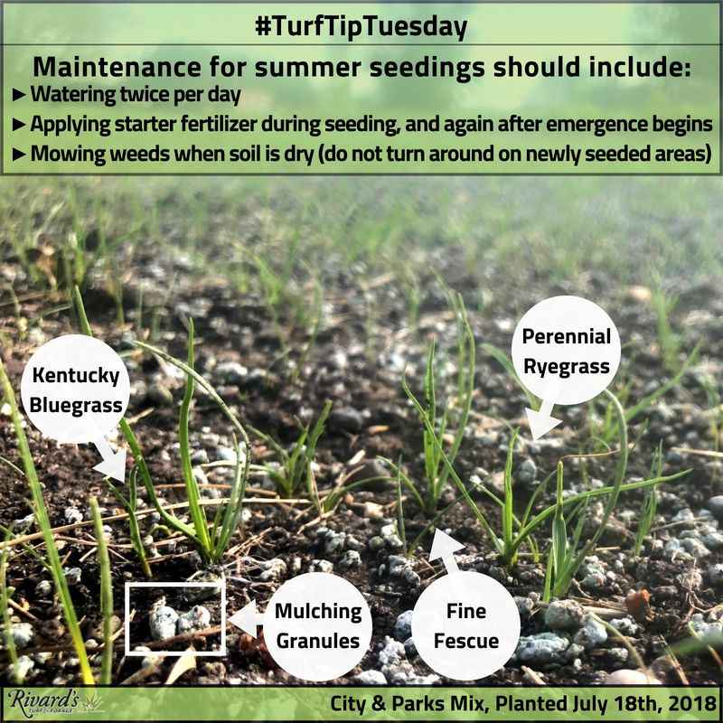 Happy Turftiptuesday Larry And Crew Have Been Working Hard To Get Some New Grass Seed Going Here At Rivard S The Str Diy Landscaping Mulching Lawn Care