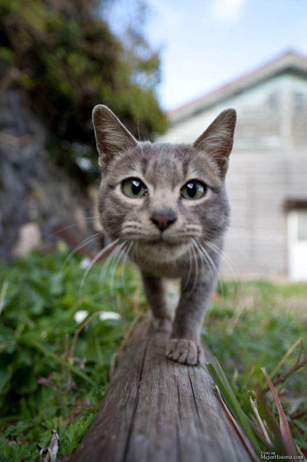 Hoy estoy gatuna, porque adoro a estos animales, y no puedo evitar compartir todo lo que encuentro sobre ellos, y sobre todo si es un poco curioso.....