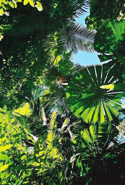 f6626ced0fd85 Rainforest Leaves by Dick Dangerous   UNESCO SITES in 2019 ...