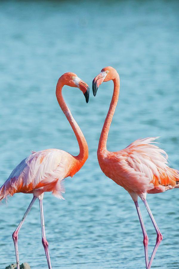 Flamingos In Love Burung Cantik Gambar Dan Trik Fotografi
