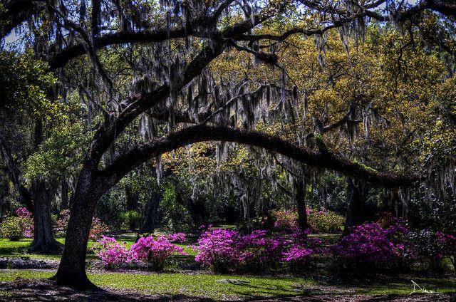 Jungle Gardens Avery Island, Louisiana. I love it there