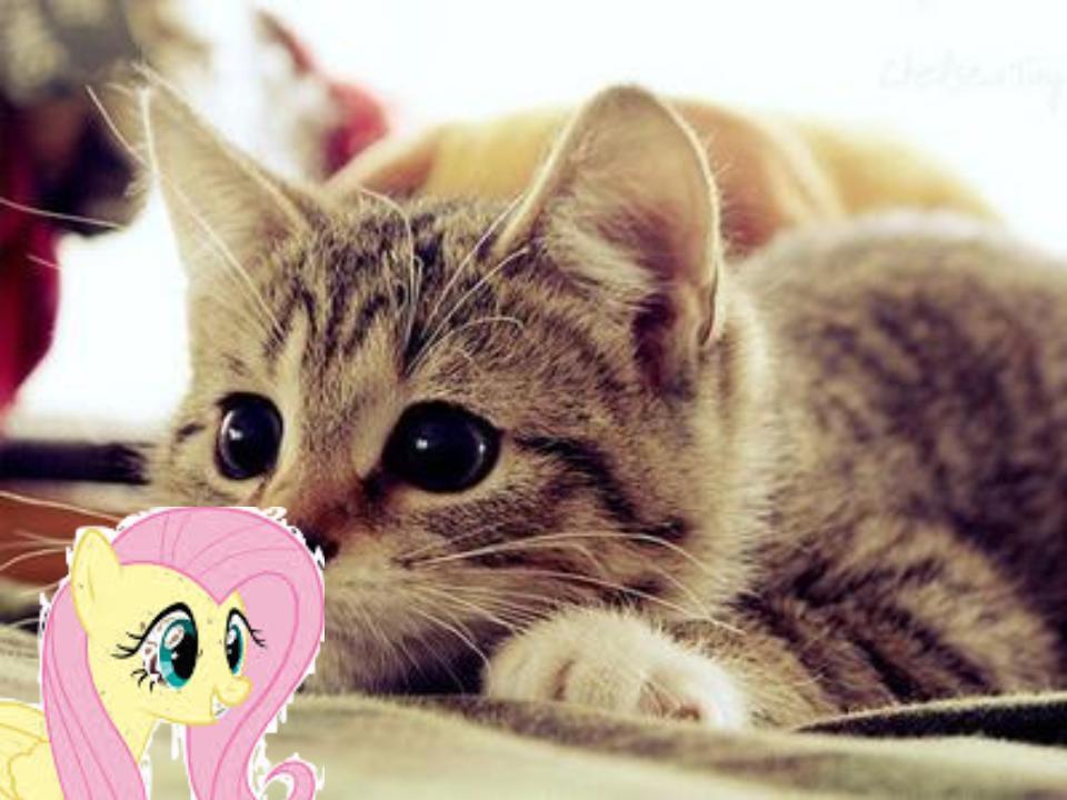 Maid Up Picher Cute Cats Animals Cute Animals