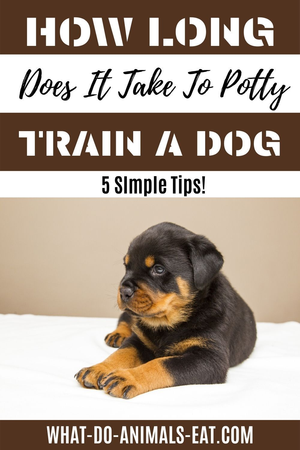 How Long Does It Take To Potty Train A Dog In 2020 Dog Potty Training Dogs Best Dog Training