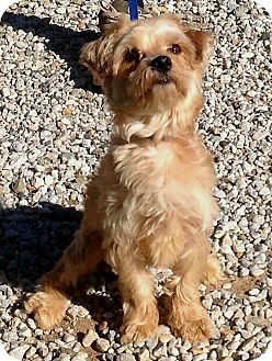 Pin By Bettylynne Cleary Moeller On Silkie Terriers Silky