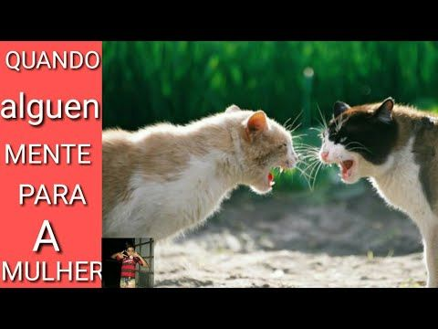 VIDEO DO REVOLTADO BAIXAR GATO
