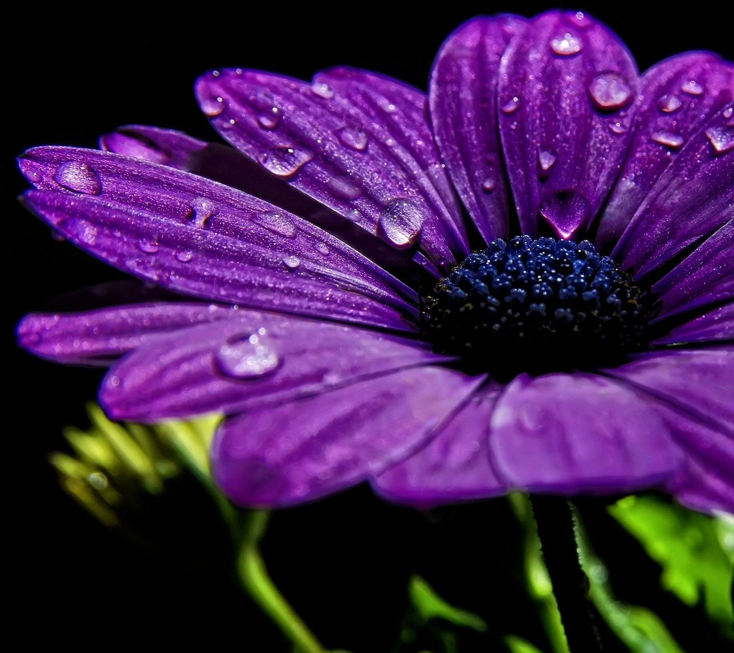 Full View And Download Beautiful Purple Flower Wallpaper