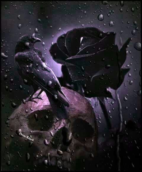 Skull Raven Black Rose Beautiful Dark Art Skull Pictures Gothic Pictures