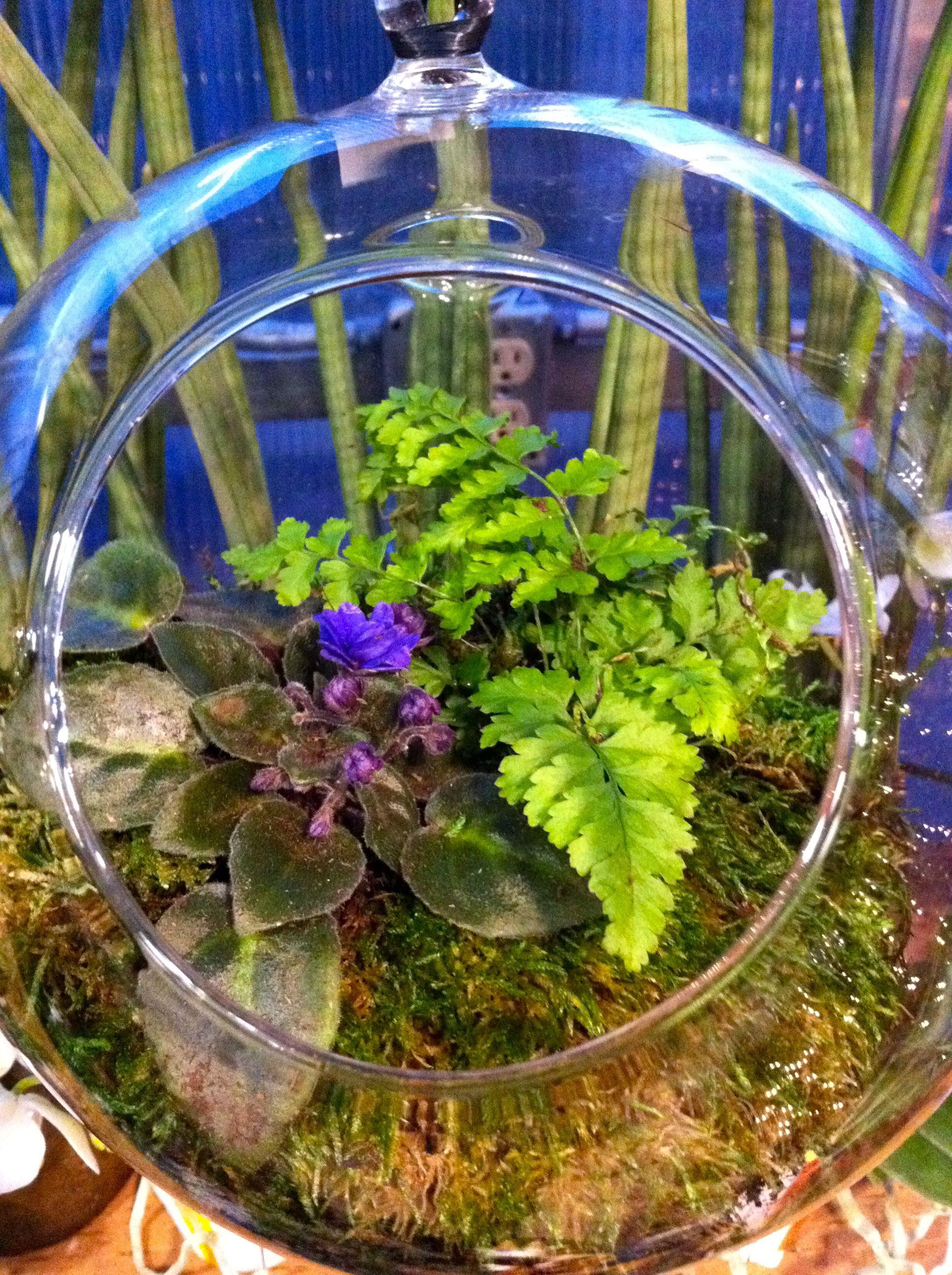 terrarium with miniature fern african violet. Black Bedroom Furniture Sets. Home Design Ideas
