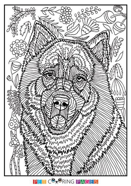 Siberian Husky Coloring Page Kyro Horse Coloring Pages