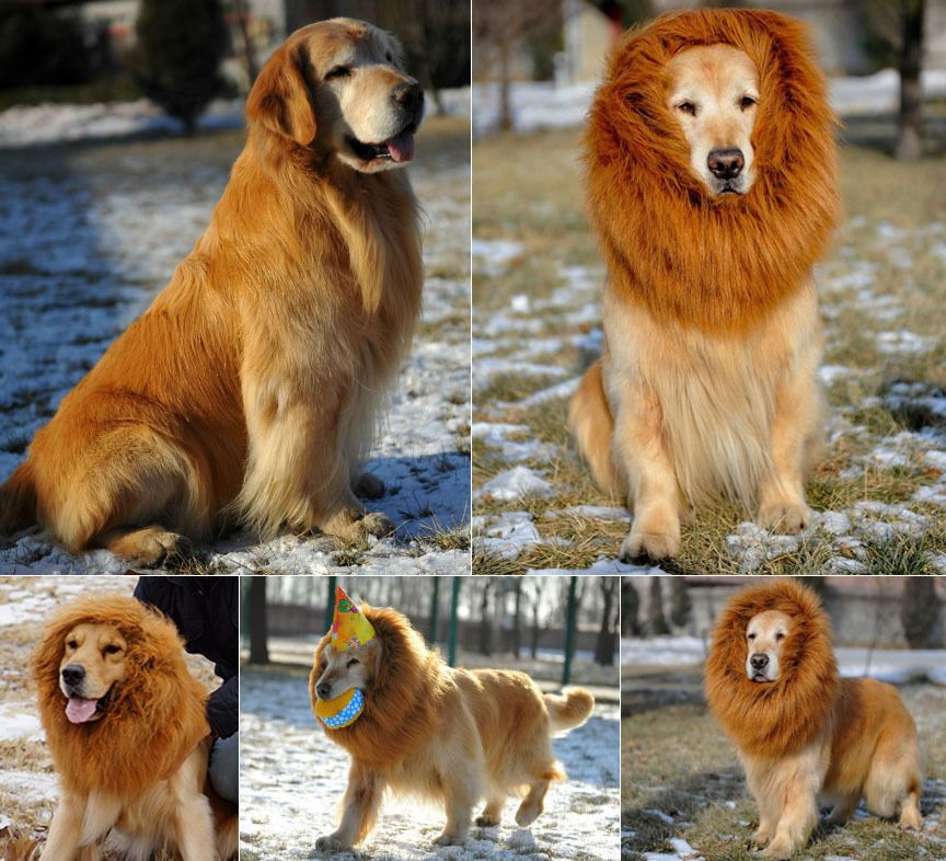 6 29 Dog Pet Costume Lion Mane Wig Cat Novelty Festival Clothes