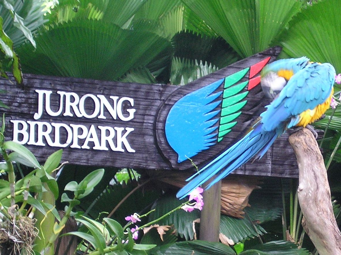 A visual treat of vibrant colors captivates your attention as soon as you enter Jurong Bird Park in Singapore. There are around 8000 of birds of over 600 varieties which are present in this open air natural conservation park. You can have a leisurely walk exploring the colorful spread of enclosure of birds in their natural habitats at the Jurong Bird Park. The Jurong Bird Park is home to flightless birds, the majestic penguins from Antarctica, fl