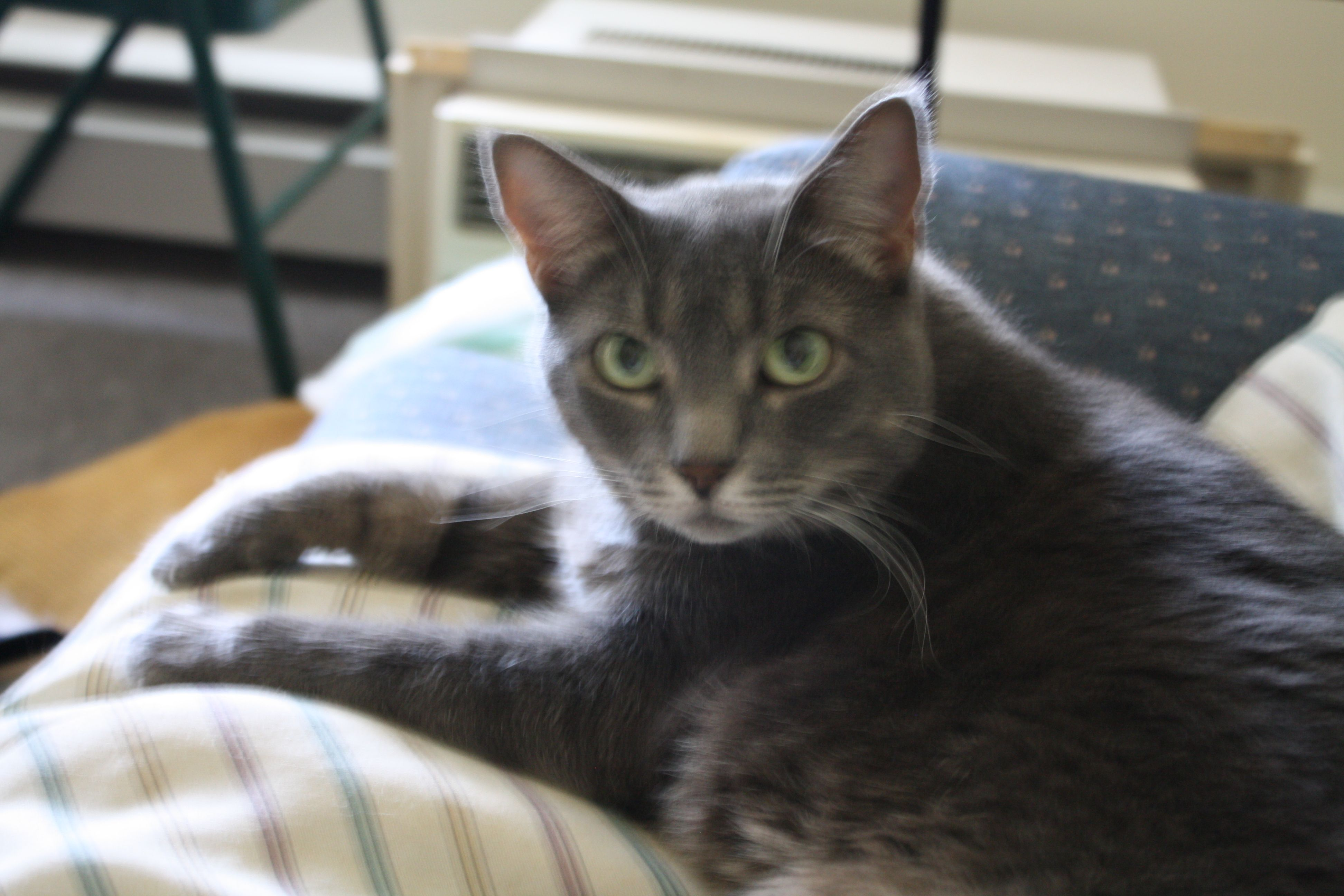 This is my cat Mazee. She is the best companion. But she loves to talk.