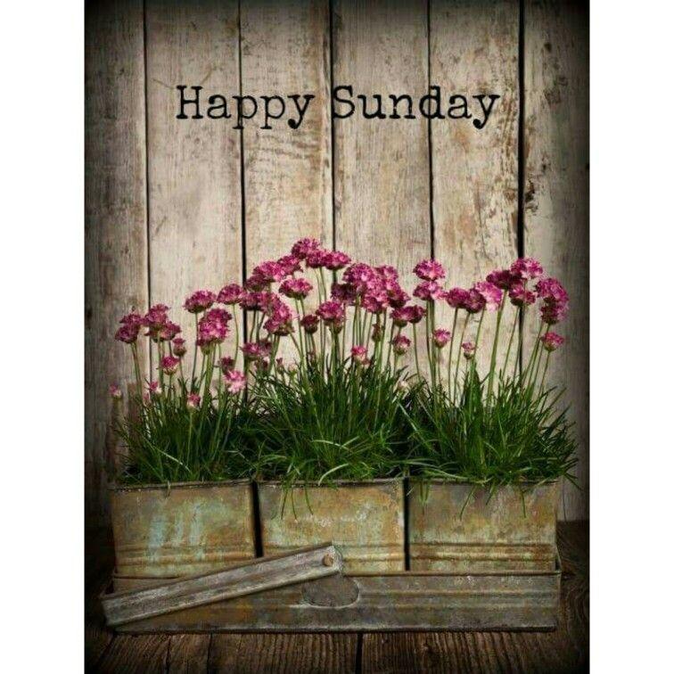 Pflanzen, Malerei, Blumen, Schöne Blumen, Rosafarbene Blüten, Haus Und  Garten, Traumgarten, Gartenkunst, Gartenideen