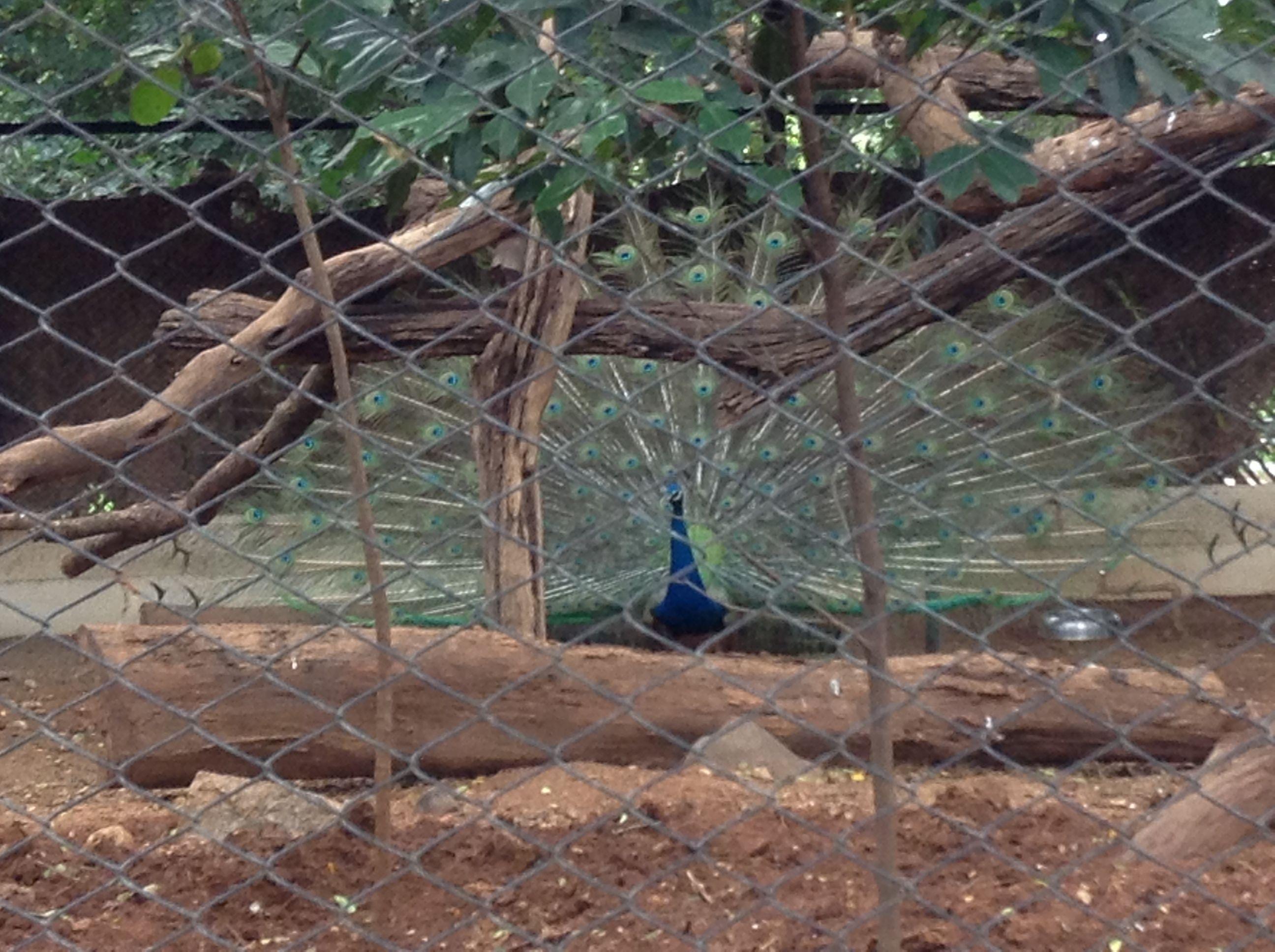 51197e92fb273d64ac785b89a95860a4 - Mysore Zoo Sri Chamarajendra Zoological Gardens