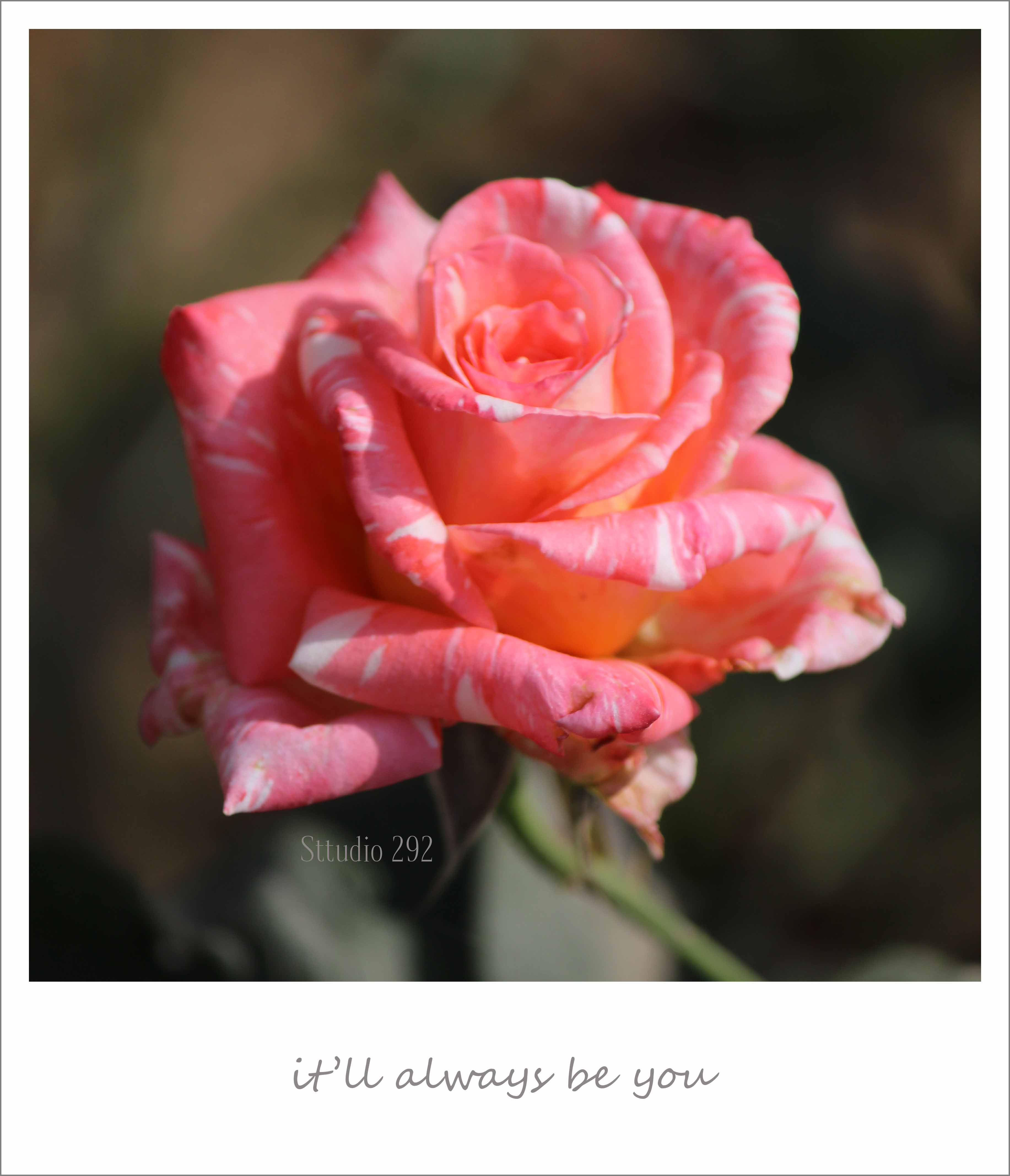 Love notes love notes with roses roses pictures of roses love notes say it with roses izmirmasajfo