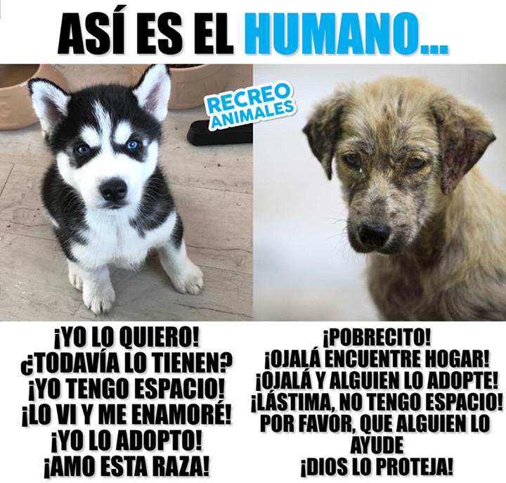 Absolutamente Todos Merecen Una Oportunidad No Discrimines A Los Que No Son De Raza Perros Frases Perros Perros Tristes
