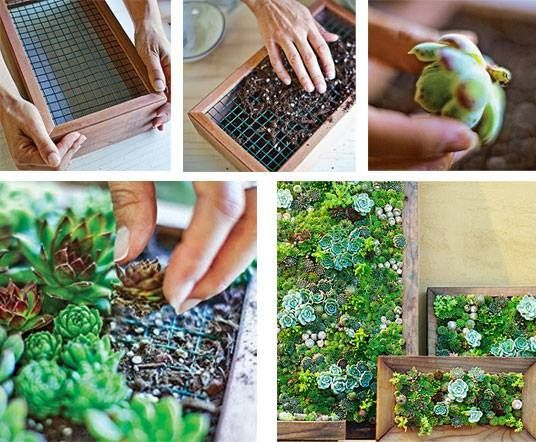 Sukkulenten In Korkstopsel Anlegen Eine Tolle Deko Idee , Cuadros Vivos Google Search Peque Jardin Pinterest