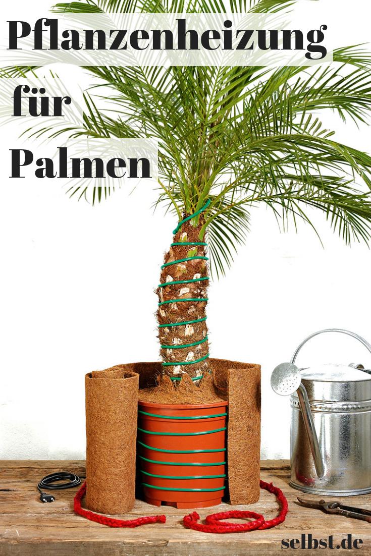 Palmen Uberwintern Selbst De Tropische Pflanzen Palmen Garten Pflanzen