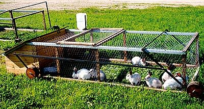 Rabbit Tractor  Great for people who raise rabbits for food or even as pets.(Much happier rabbits) :D