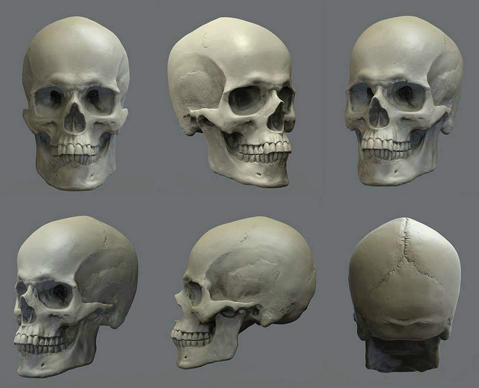 Pin de Marcela Cedron en anatomia humana | Pinterest | Anatomía y ...