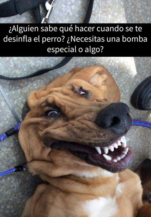 15 Snapchats de perros que te alegrarán el día. Parte II