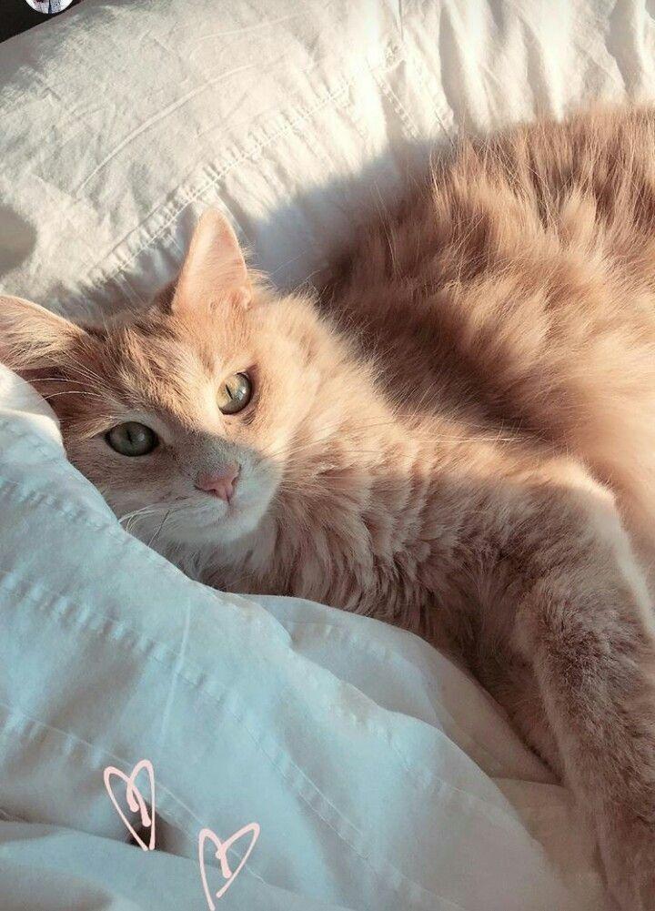 #gatos #cats #catsofinstagram #gatosdeinstagram #cat #gato #catstagram #instacat #gatosdoinstagram #