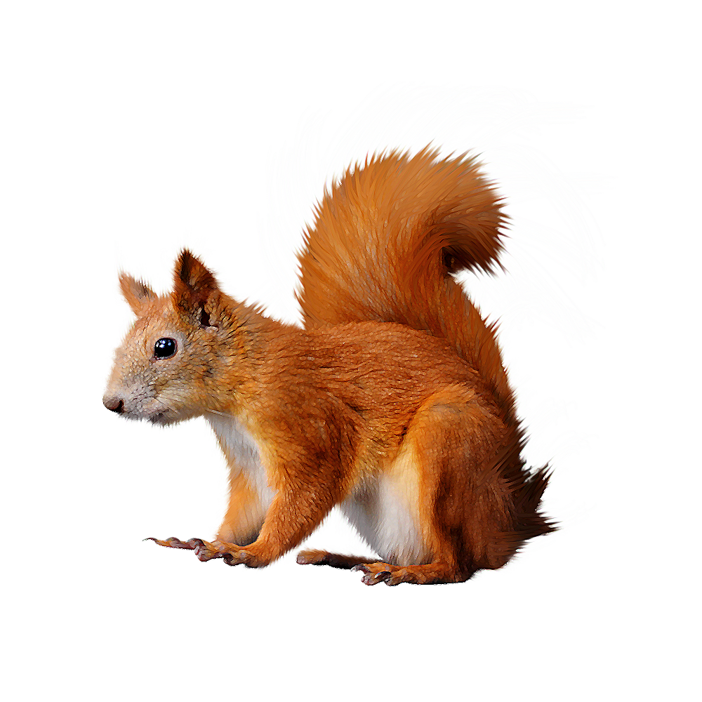 Squirrel PNG | Animal PNG | Pinterest