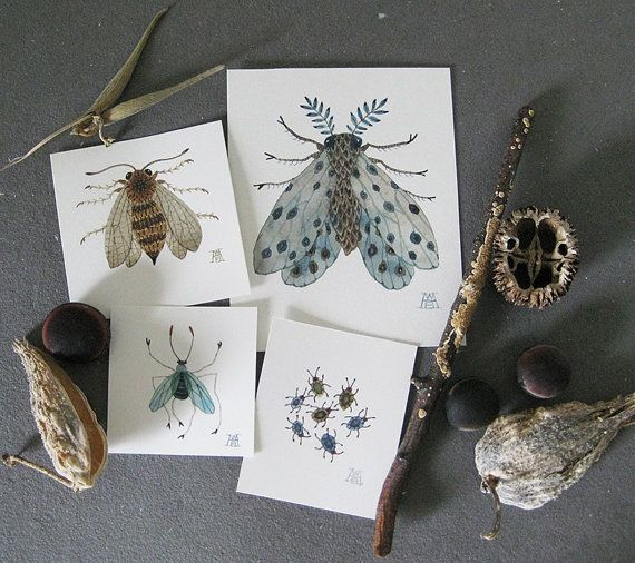 Slate Insect Collection, miniature small watercolor paintings, set of four