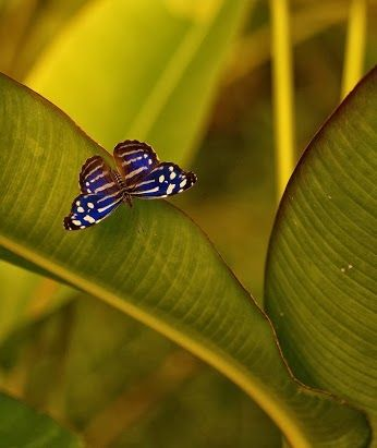 via Animals ,Flowers & Nature (Hayvan,Bitki&Doğa) - Community - Google+