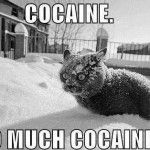 What cats think about winter
