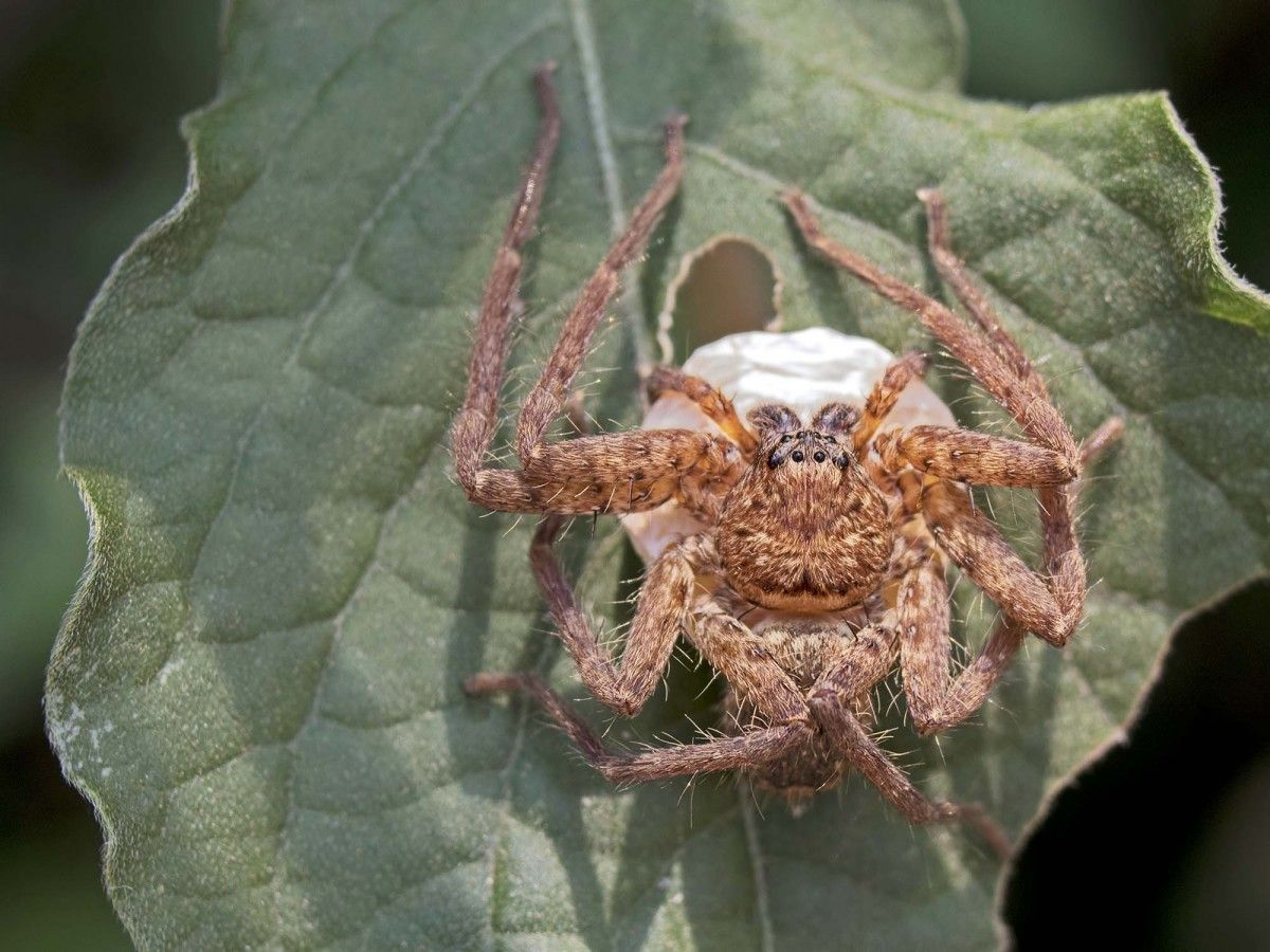 Spider In India In