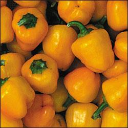 Pepper Baby Yellow 250 seeds Stuffed peppers, Sweet bell