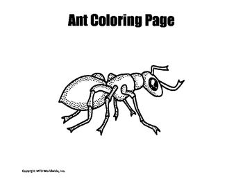 Insect Coloring Pages Packet Insect Coloring Pages Coloring Pages Intermediate Classroom