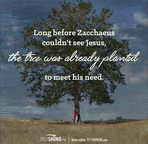 Image result for Long before Zacchaeus couldn't see Jesus, the tree was already planted to meet his need