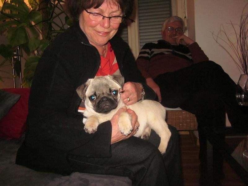 Mops und Oma