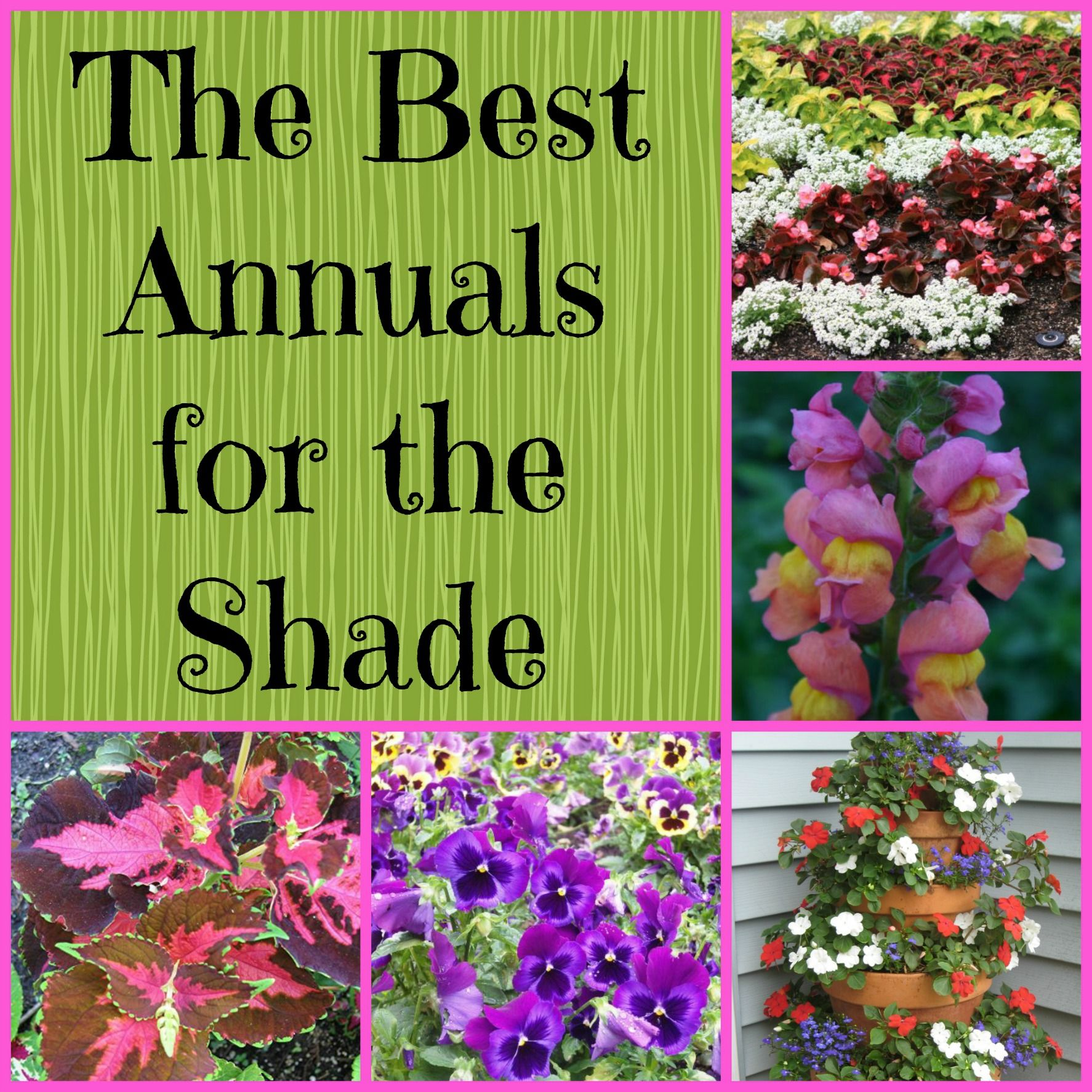 Gardening in the Shade: Annual Plants for Shady Areas   Outdoor ...