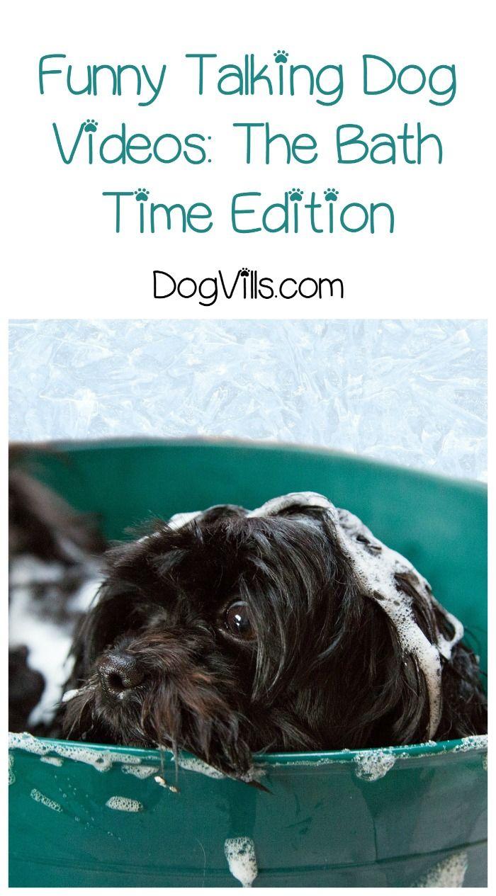 5 Funny Talking Dog Videos After Bath Edition Funny Talking Dog