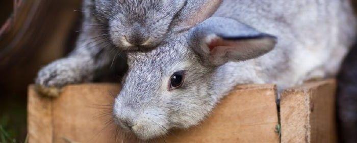 Rabbit petcare info   Rabbit cages, Pets, Raising rabbits ...