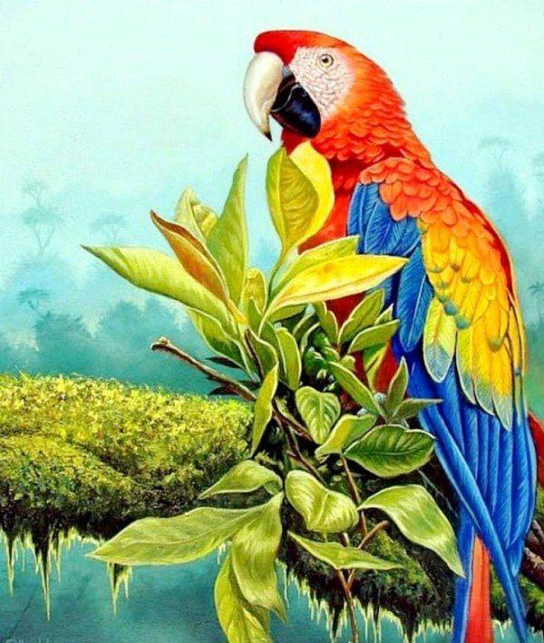 pinturas u cuadros bonitos cuadros con aves pintura leo