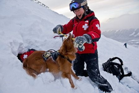 Avalanche Search And Rescue School Makes Training Fun For Dogs
