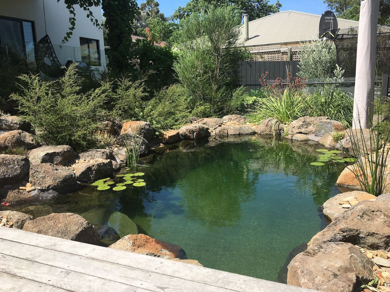 Our Projects Natural Swimming Pools Australia Natural Swimming Pools Swimming Pools Natural Pool