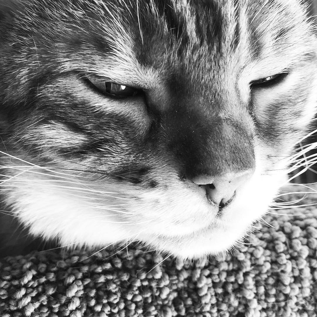 I think Brenna's trying to tell me that it's way past my bedtime! #sleepykitty  #latenight #ineversleep #nightowl #wideawake #monday #tuesday #blacknwhite_perfection #blackandwhite #ladybrennaoffairfax #cat #cats #catsofinstagram #catsagram #catsofworld #kitty #katzenworldblog #cats_of_instagram #catlover #bengal #bengalcat #bengalsofinstagram #bengal_cats #faithhopeloveandlucksurvivedespiteawhiskeredaccomplice #vais4bloggers #vafoodie #foodblog #foodblogger #virginia